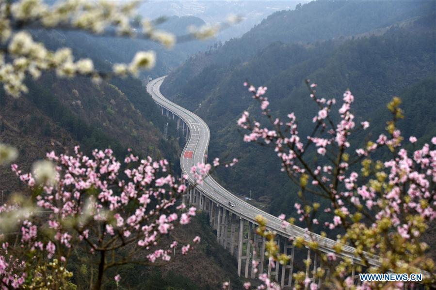 In pics: blooming flowers along Sijian expressway in SW China's Guizhou