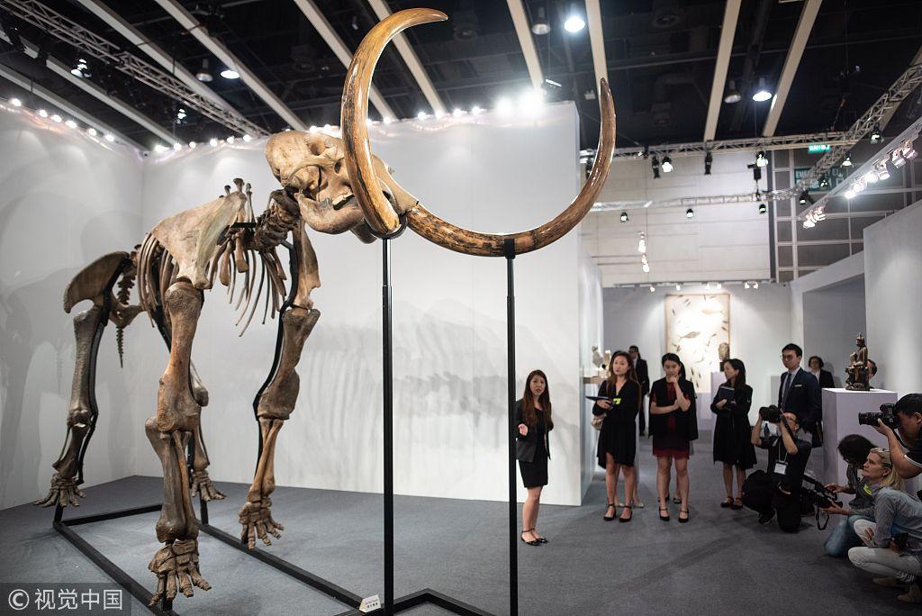 Giant woolly mammoth skeleton on display in Hong Kong