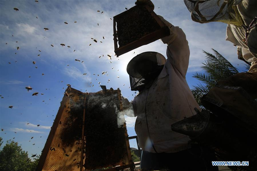 Palestinian beekeepers working at bee farm in Gaza Strip city