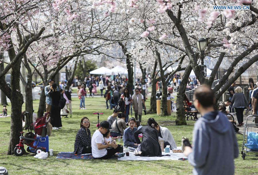 Roosevelt Island Cherry Blossom Festival attracts crowds of visitors in New York