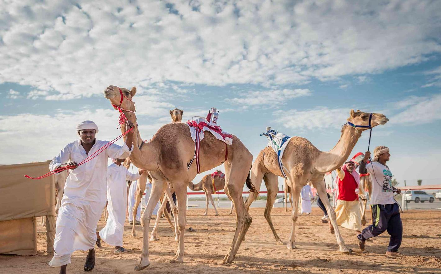 Al Wathba camel races in Abu Dhabi.png