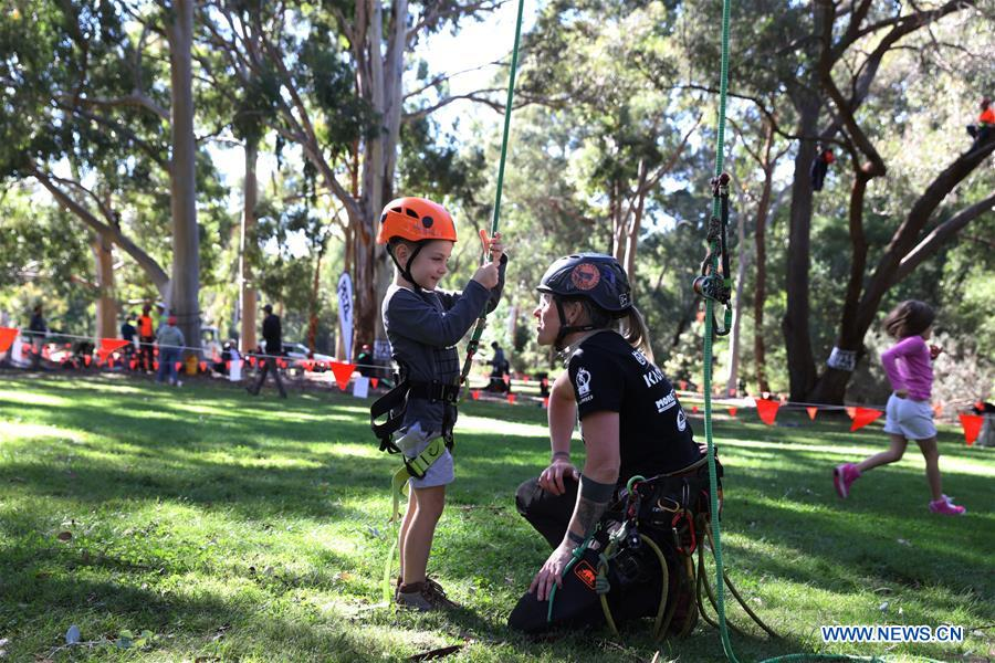 Annual tree climbing event held in Canberra, Australia
