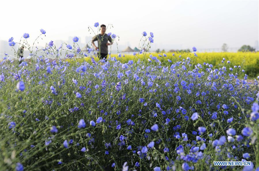 Scenery of flowers in Linyi, China's Shandong Province