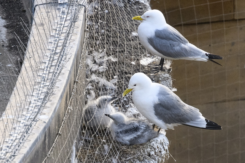 100,000 people signed petition to remove netting