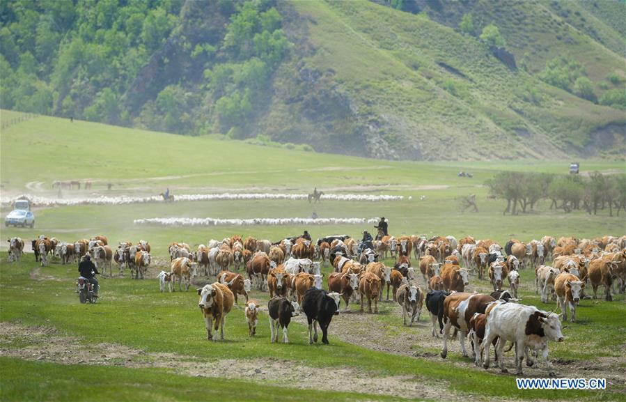 View of Ar Horqin grassland in China's Inner Mongolia