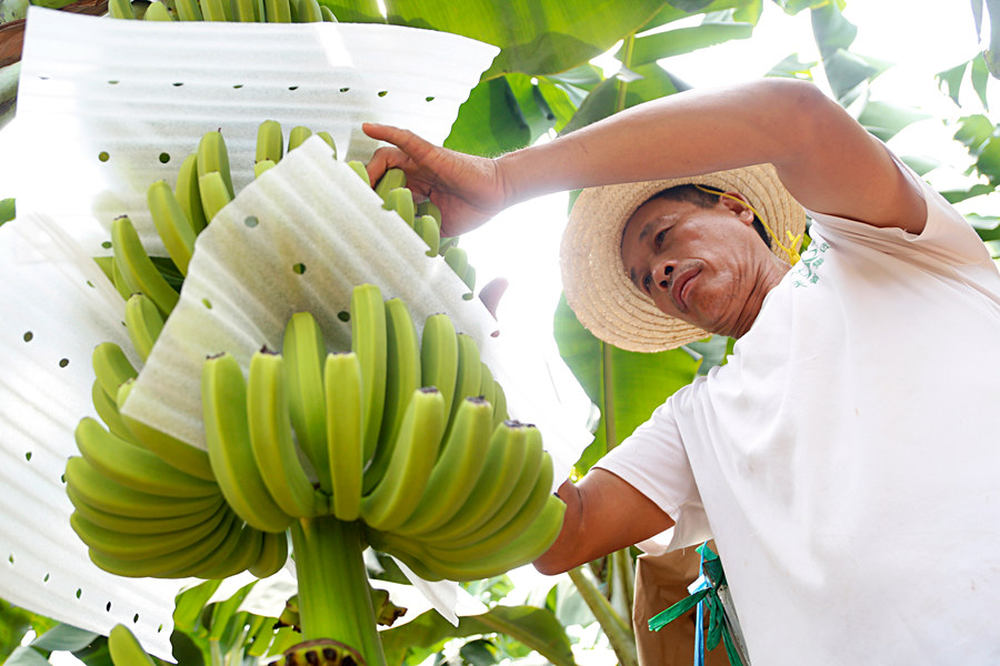 To help the poor, motivate them first: poverty alleviation stories in south China's Hainan