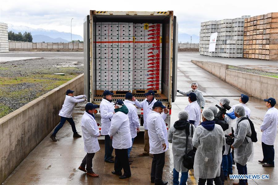 Employees work at fruit factory in San Fernando, Chile