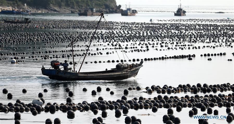 Fishermen in NE China's Liaoning busy working as harvest season comes