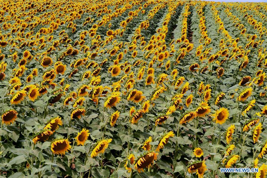 Export of sunflower oil from Ukraine reaches 5 mln tons: authorities