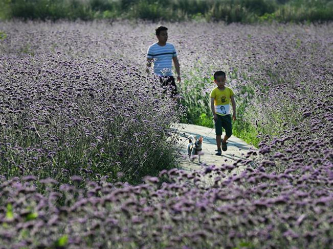 Tourists enjoy blossoming flowers in Liuba, China's Shaanxi