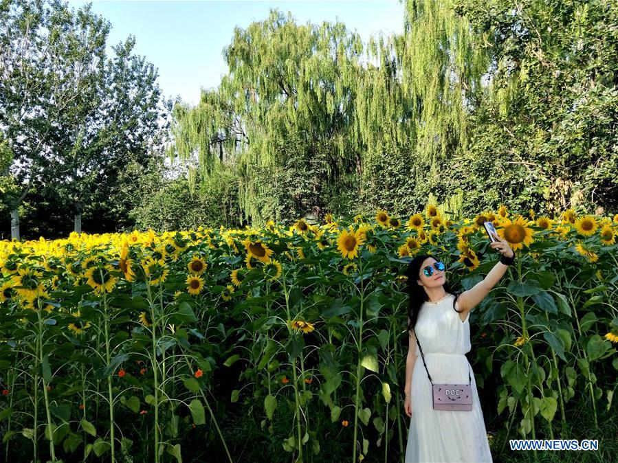 People view sunflowers at Beijing Olympic Forest Park