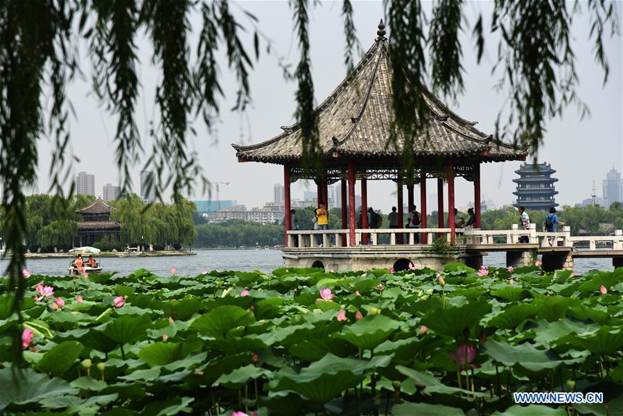 Lotus flowers bloom on Daming Lake in east China's Shandong