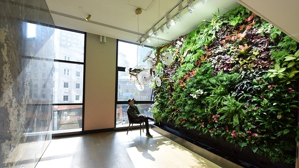 Chinese man creates unique 'green walls'
