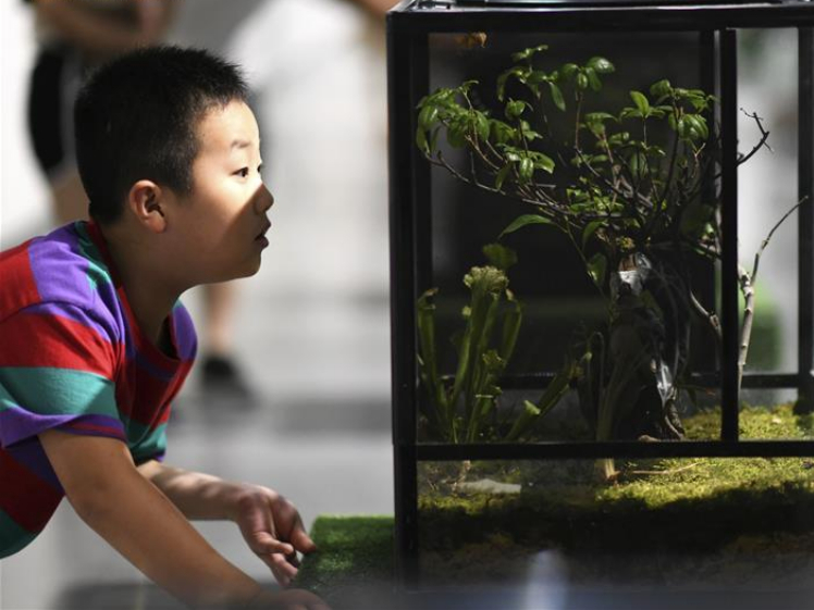 Exhibition of insects held in Xi'an to popularize scientific knowledge