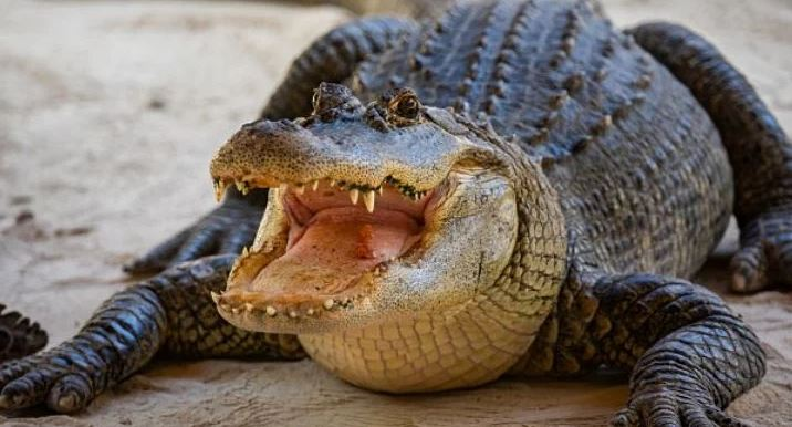 Tossing drugs in toilet could lead to 'meth-gators': US police