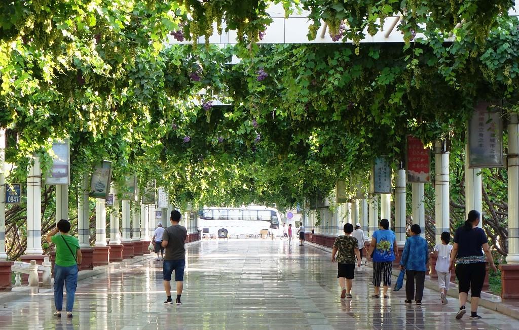 2019年7月3日,新疆吐鲁番,几位市民和游客漫步在相对阴凉一些的葡萄长廊里.jpg