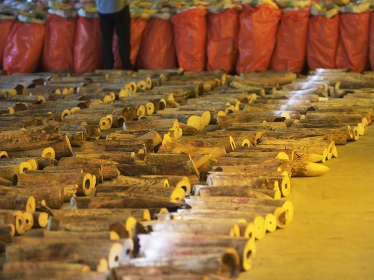 Singapore seizes tons of pangolin scales, elephant ivory
