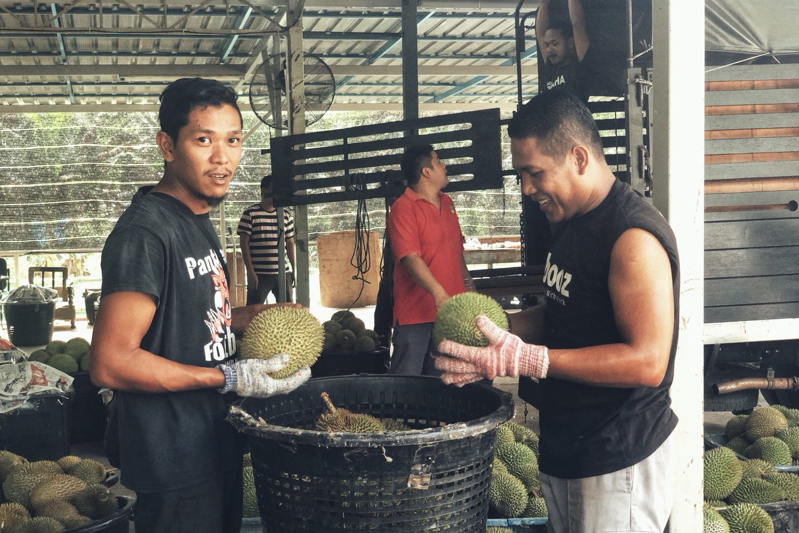 Malaysian durian aims at the Chinese market
