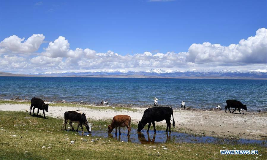 Scenery of Mapam Yumco Lake in southwest China's Tibet
