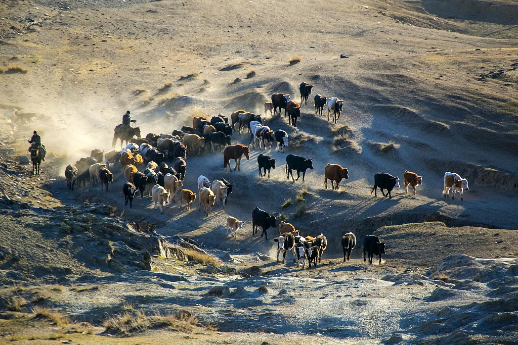 Poverty-relief relocation brings happiness for Xinjiang herders