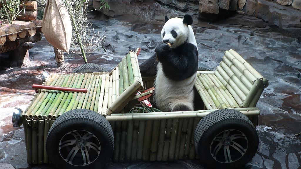 Panda receives custom-made car for birthday