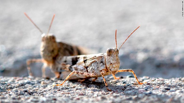 190726154221-02-grasshopper-las-vegas-exlarge-169.jpg