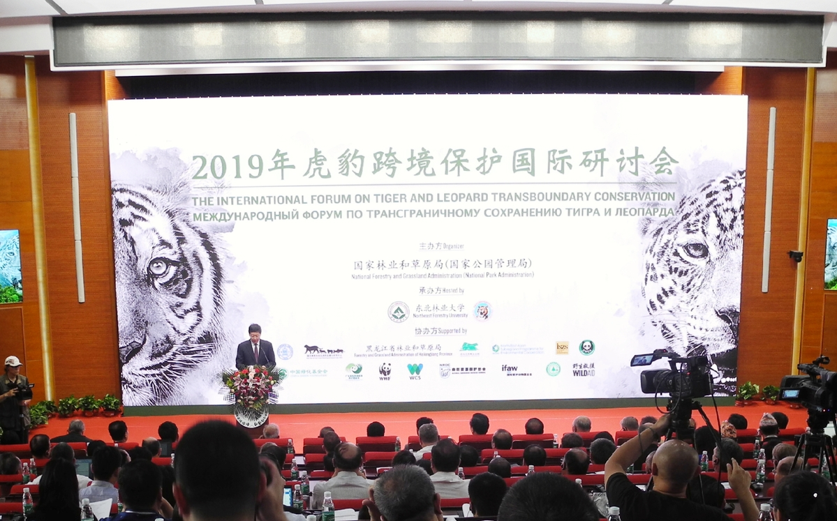 China completes 12,000 sq km of monitoring area for Siberian Tigers, Amur leopards