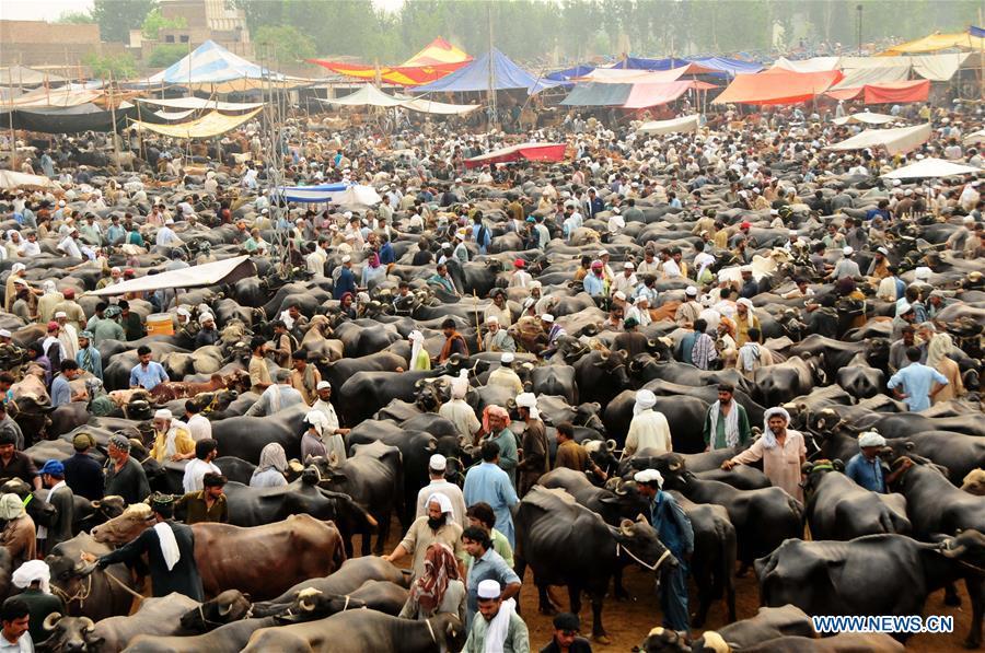People trade at livestock market ahead of Eid al-Adha festival in Pakistan