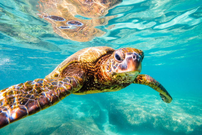 Chinese-Australian research hatches new gender clues about turtle embryos