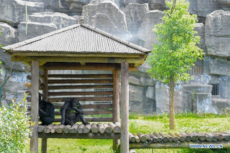 Changsha zoo keeps animals cool in summer
