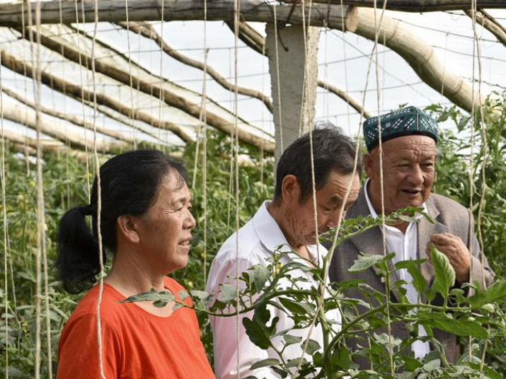 Xinjiang village strengthens ethnic unity and boosts development, inspired by Xi's letter