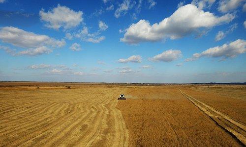 soybean farm.jpeg