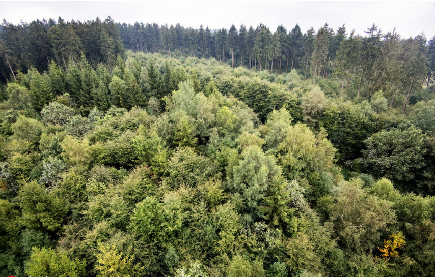 Plan targets protection of natural forest