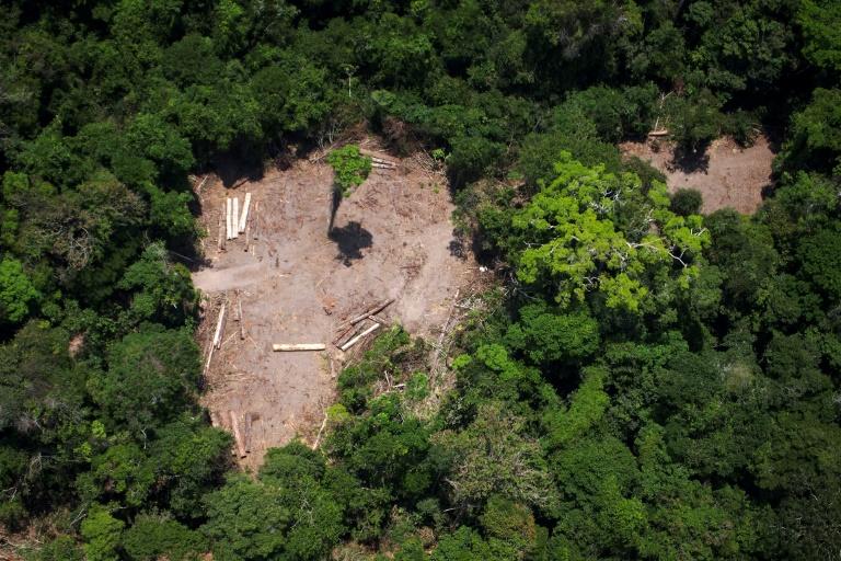 Brazilian Amazon deforestation surges, embattled institute says