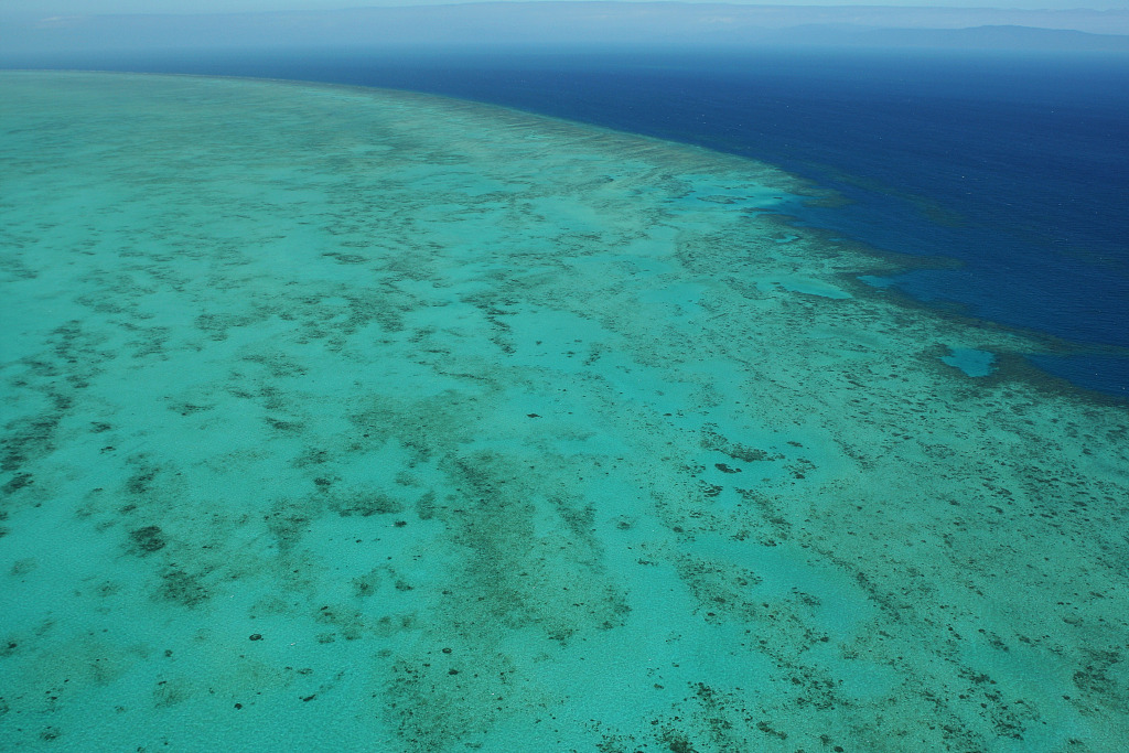 Heatwaves kill coral reefs far faster than thought: study