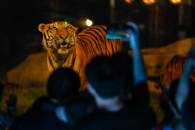 China's first night wildlife park opens