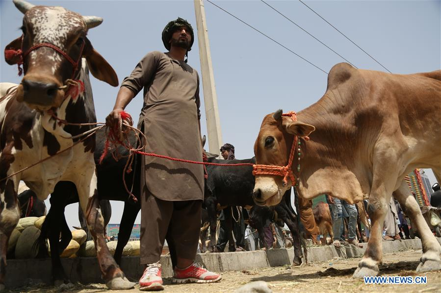 People trade at livestock market ahead of Eid al-Adha festival in Kabul, Afghanistan
