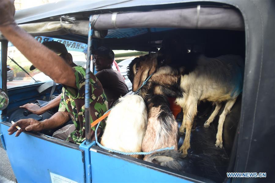 People trade at livestock market ahead of Eid al-Adha festival in Jakarta, Indonesia