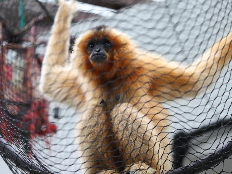 Animals seen at Pairi Daiza zoo in Brugelette, Belgium