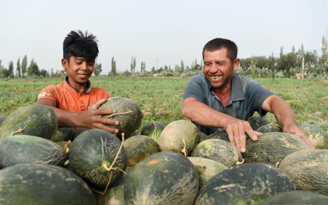 Farmers busy with collecting Jiashi cantaloupes in Kashgar, China's Xinjiang