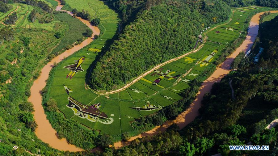 Patterned paddy fields in Kunming, China's Yunnan