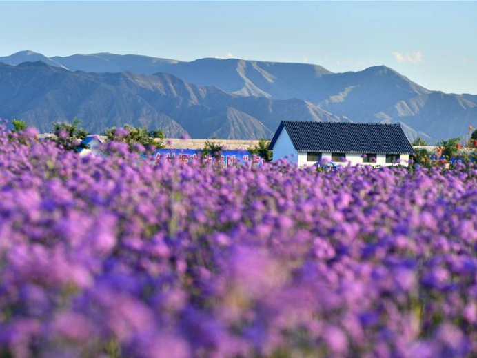 Demonstration park plants flowers to promote local tourism in NW China