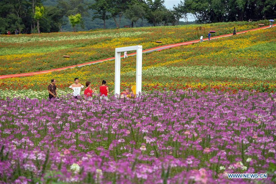 Scenery of flowers at Dabei Village in Changchun