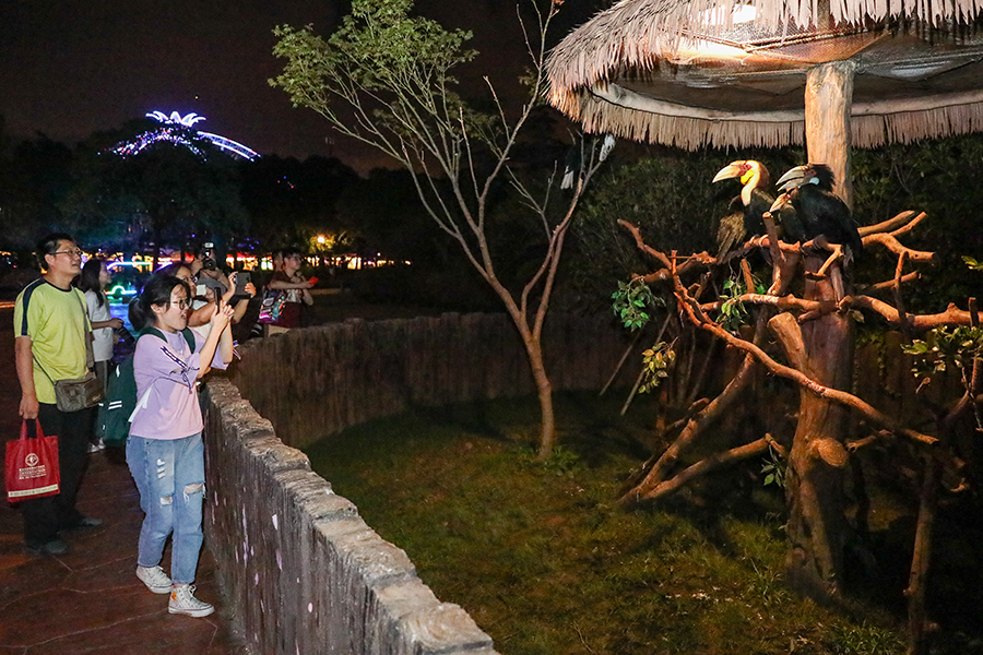 Night tours become popular