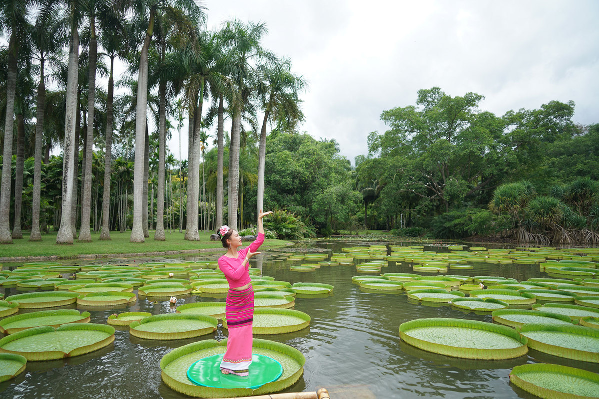 Lotus Victoria: a new tourist attraction for Yunnan