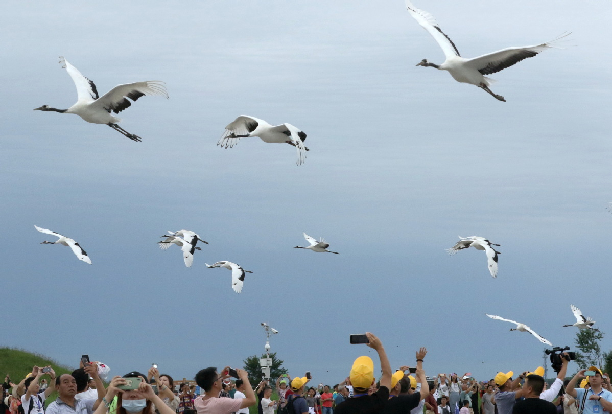 Draft rules to protect wildlife in Heilongjiang