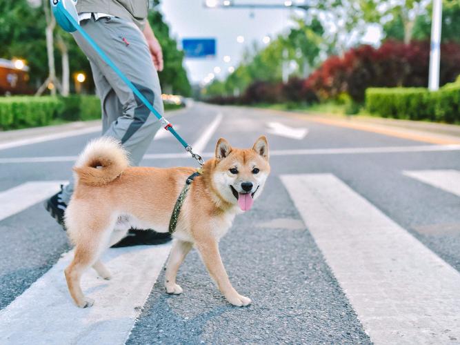 Pet economy market to surpass 200b yuan this year
