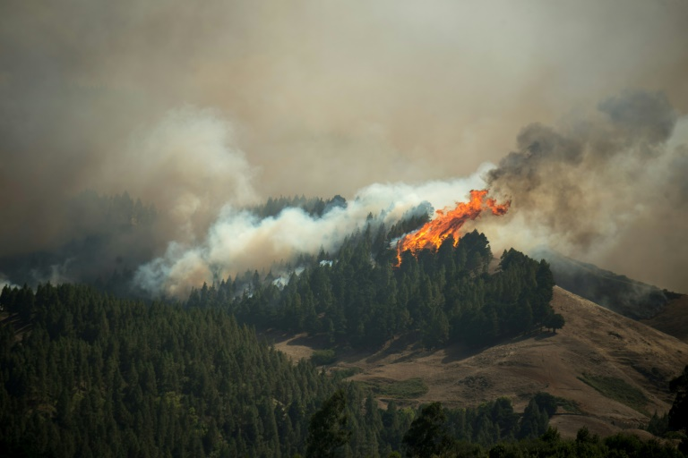 'Environmental tragedy' as Canary Islands fire out of control