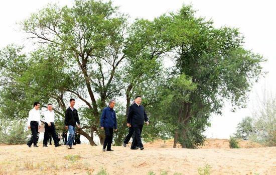 xi afforestation.jpg