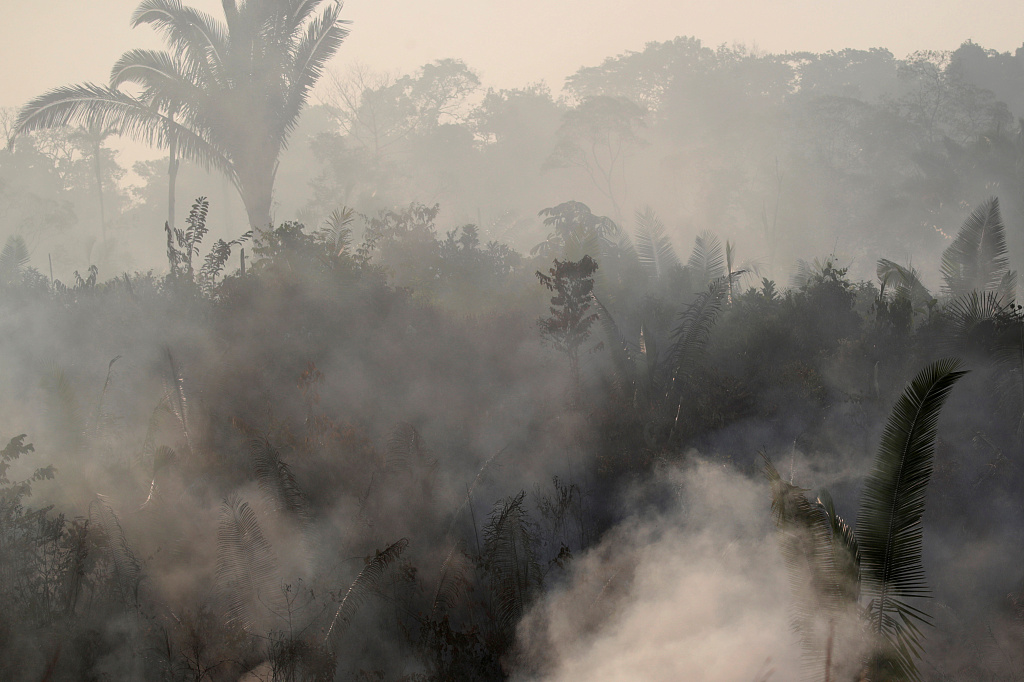 Amazon wildfires spark global concern over climate change, biodiversity